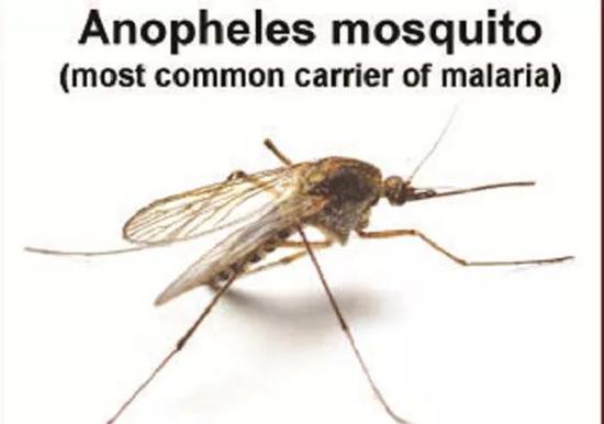 人类为蚊子献血 网友:这怕是个笑话?